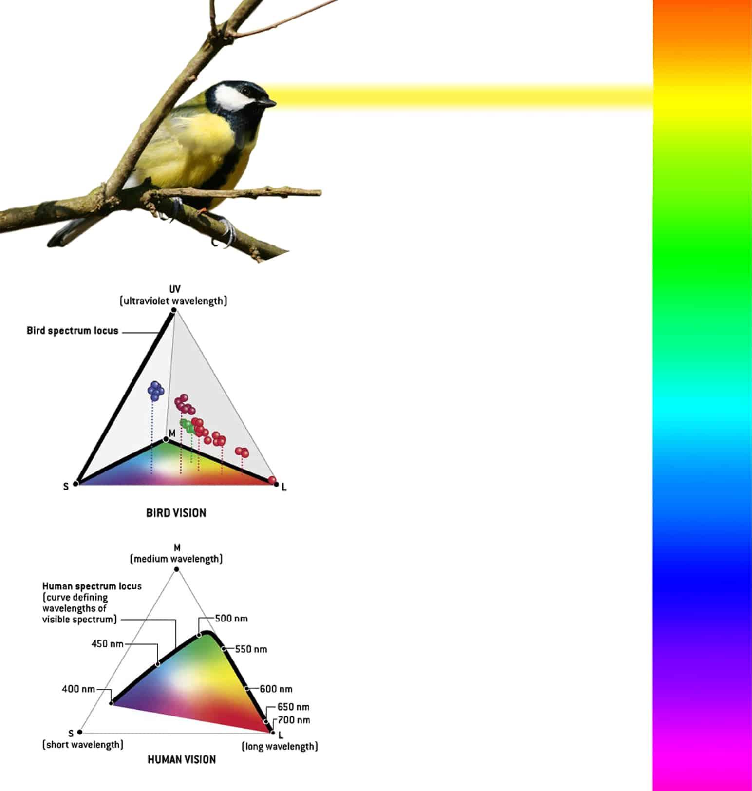 B+M Architecture - Liffey-la biodiversité comme vecteur de conception